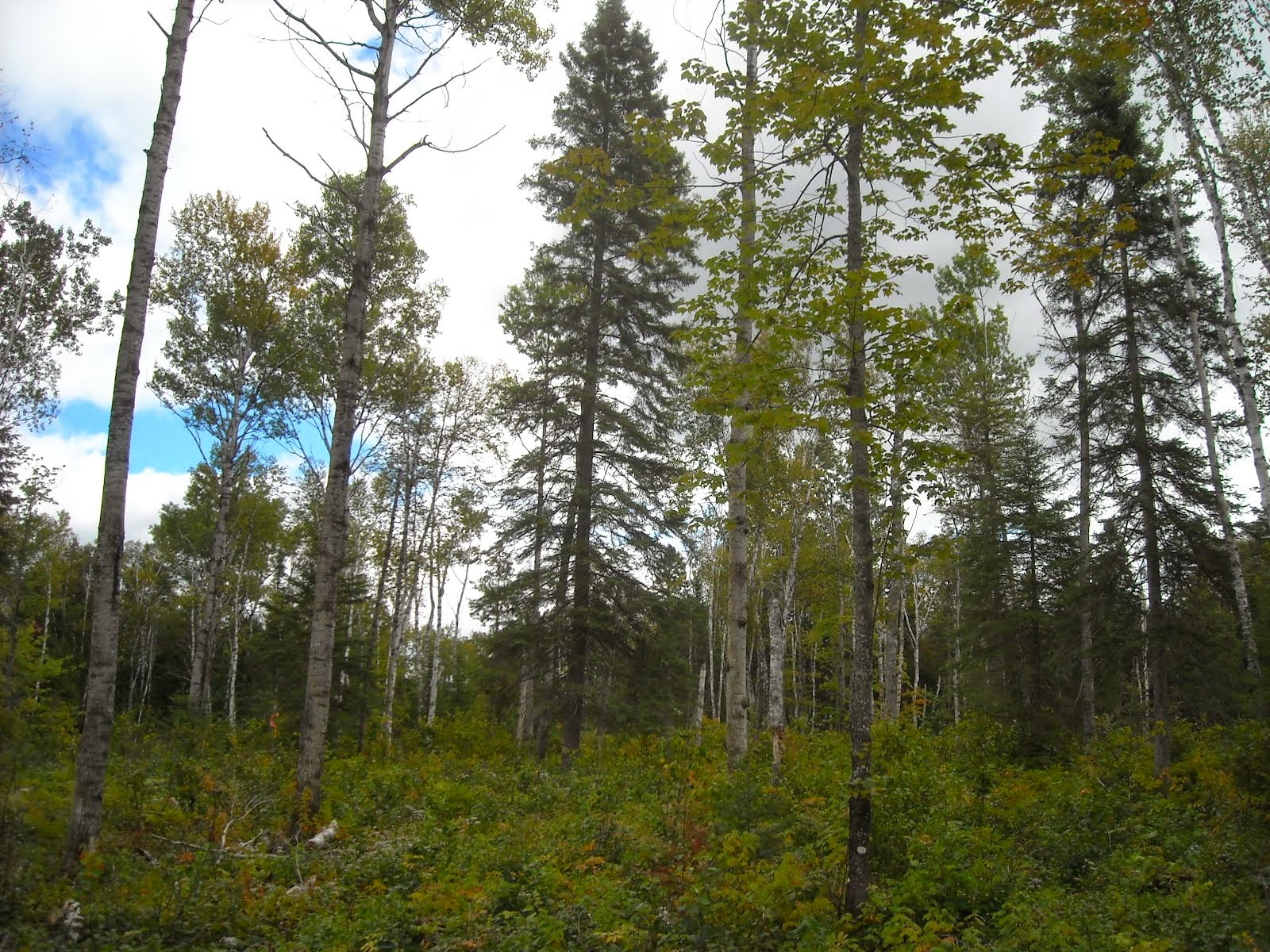Northwoods Demonstration Projects