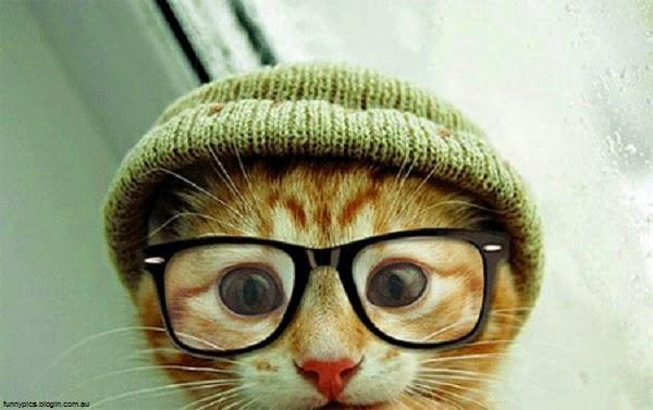 Photo chat drôle avec lunette et bonnet
