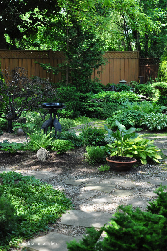 Partial Shade Garden Ideas Photograph | Three Dogs in a Gard