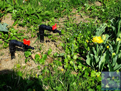 tevi floare galbena gradina botanica bucuresti