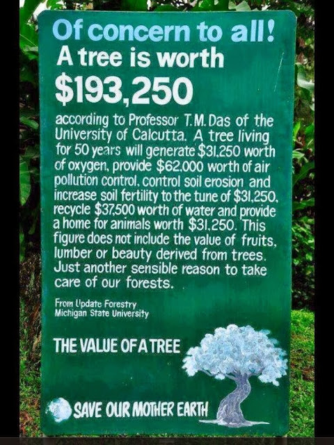 Monetary Worth of a Tree