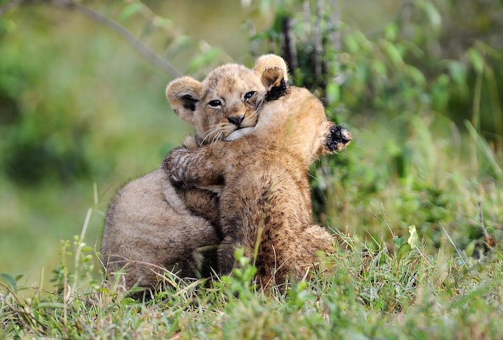 18 adorables fotos de animales sorprendidos dandose un cálido abrazo