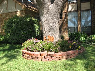 хризантемы-садовые