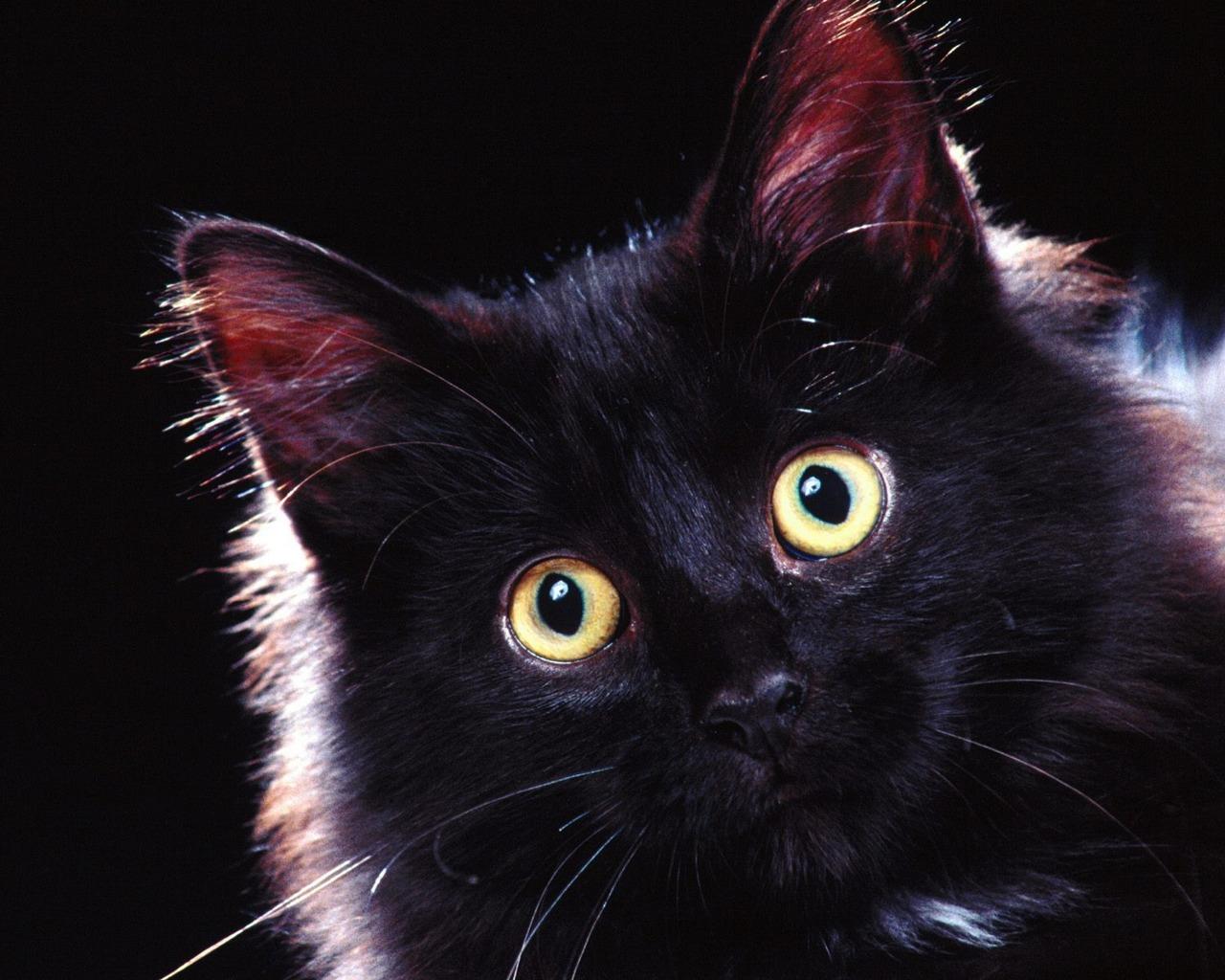 Black Beautiful Cute Cat
