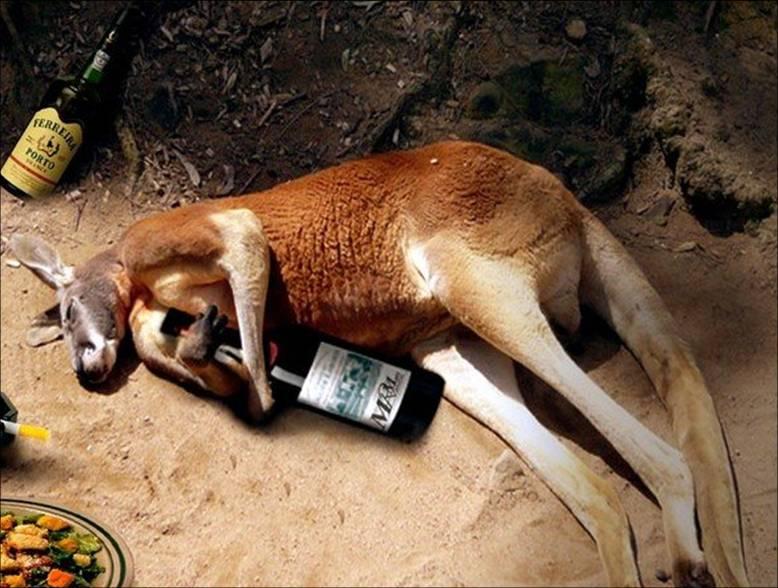 Funny drunk animal