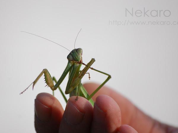 Ewww!!  Bugs!!!