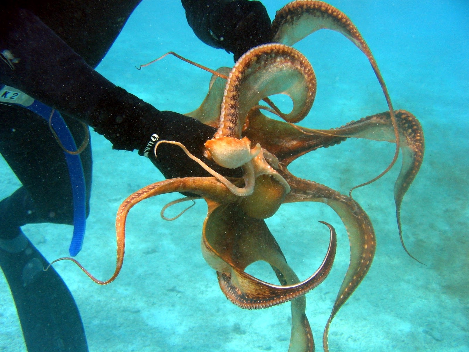 Octopus | The Biggest ...