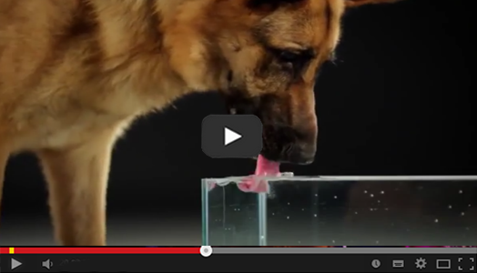 Videos de animales