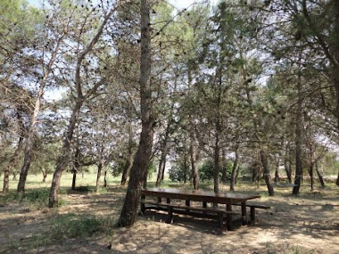 Lunch in the shade of the tall pines