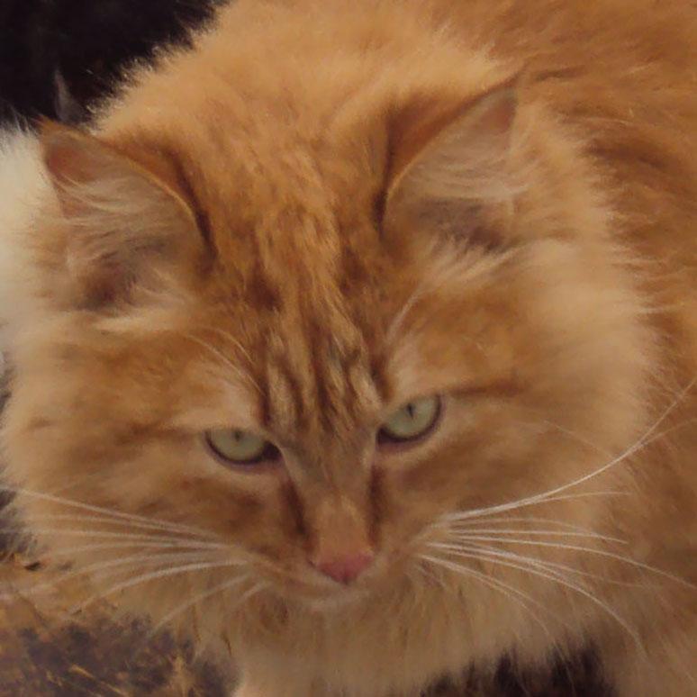 Неадекватное поведение у кота