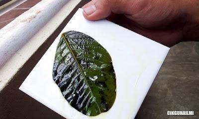 Aktiviti Menguji Kehadiran Kanji Sebagai Bukti Fotosintesis Berlaku Dalam Daun