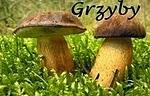 http://zmiksowani.pl/akcje-kulinarne/grzyby