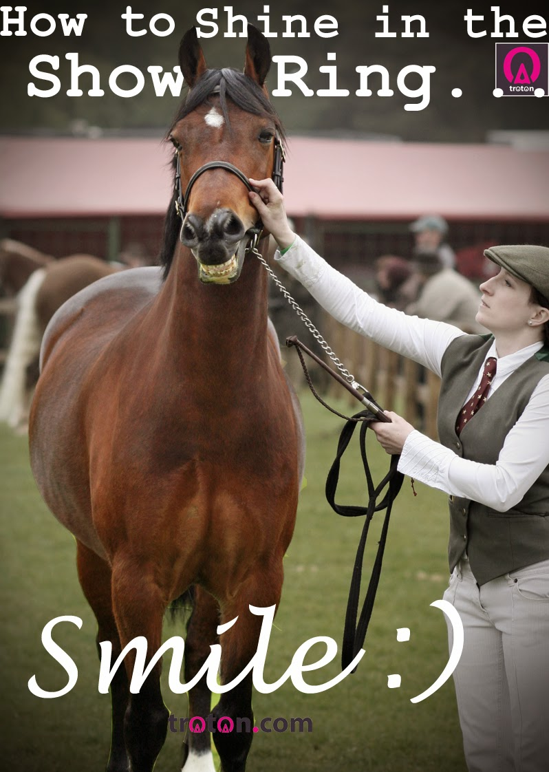 Funny Horse Photos With Captions