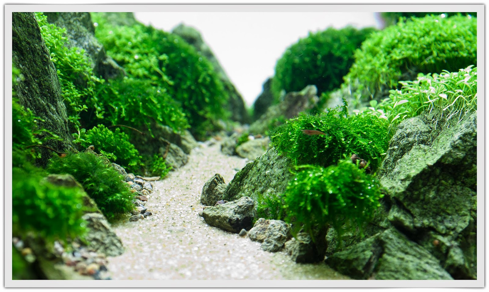 Aquascaping spain pandaria by efrain sequera - Aquascape espana ...
