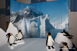 131129 Bernau+on+ice 2620