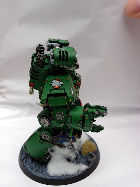 Salamanders Contemptor - Right View
