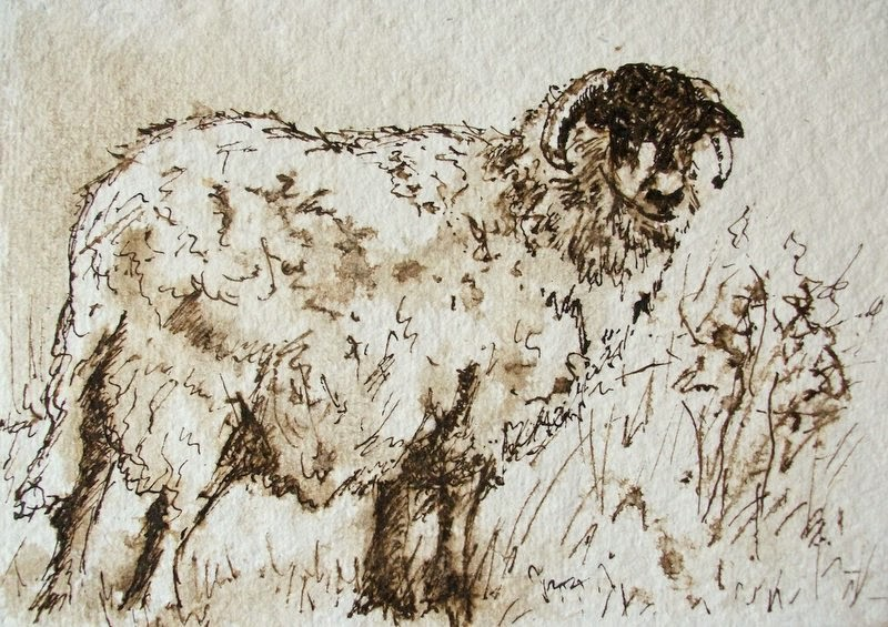 Ink sketch of a Swaledale ewe