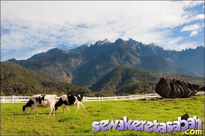 Desa+Dairy+Farm+Kundasang