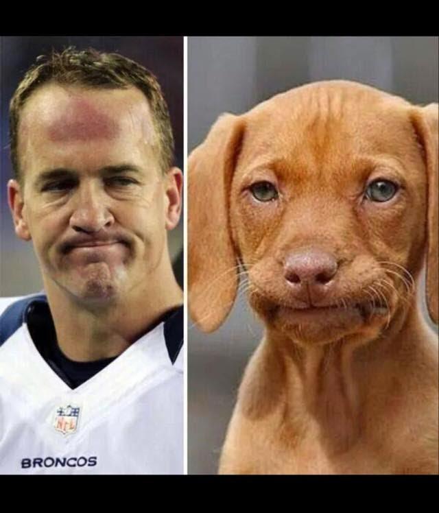 peyton face - dog