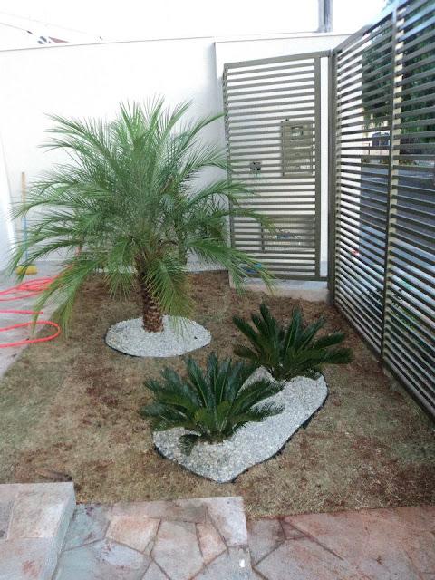 palmeira no meu jardim e uma no jardim de inverno