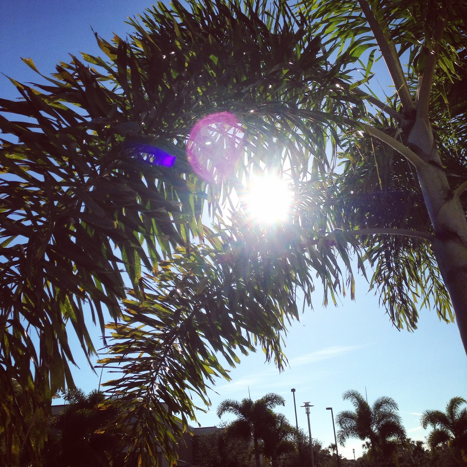wisp + whim: An Ode to Florida : Reflecting On Our Year in St. Pete