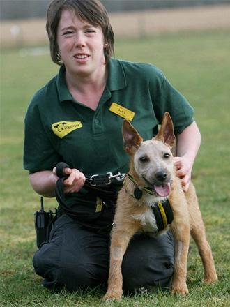 Cão foi encontrado em estado grave e só conseguia abrir a boca por
