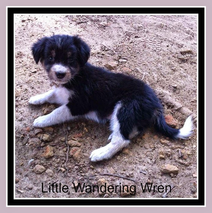 Out of africa a liberian puppy ebola saturday critters new guard dog solutioingenieria Image collections