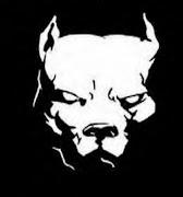 American Pitbull Dogs hd Wallpaper american pitbull dogs hd wallpapers