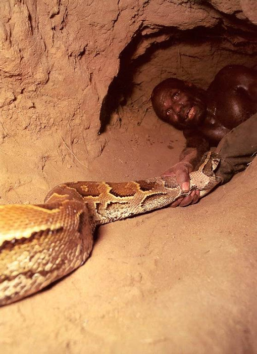http://3.bp.blogspot.com/-u9LWUoTWfBU/ThZ7tVtZC6I/AAAAAAACPgk/hsdNSA2Cnyg/s700/python6.jpg?Shocking-Pictures-of-an-African-Catching-Python-for-a-Living?Shocking-Pictures-of-an-African-Catching-Python-for-a-Living