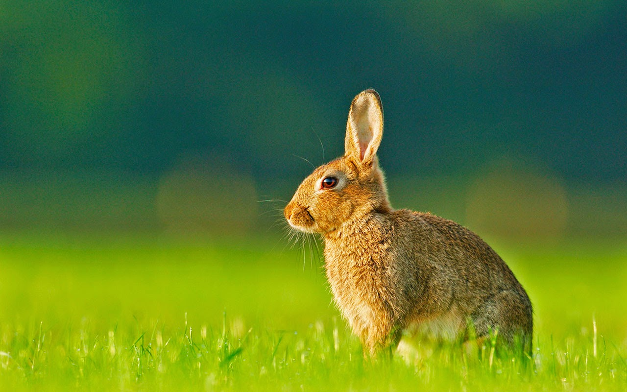 bunny computer wallpapers - photo #22