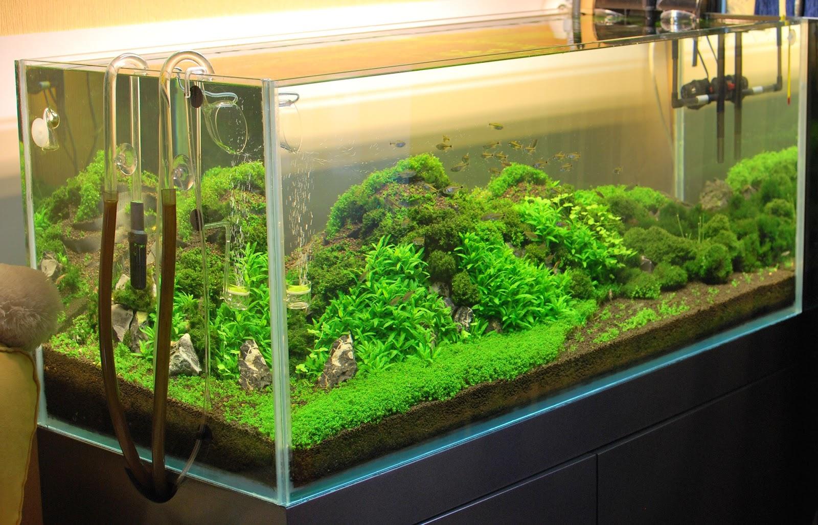 Декоры в аквариум своими руками