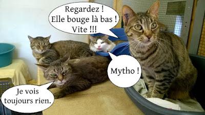 Trois chats gris et un matou blanc et tabby.