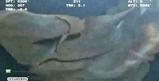 Weird Sea Monster Caught On Deep Sea Camera