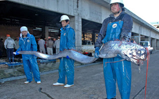 biggest oarfish
