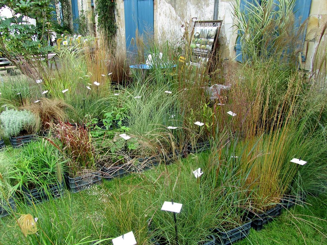 Blog de paisajismo herba nova feria de plantas raras y de for Gramineas ornamentales vivero