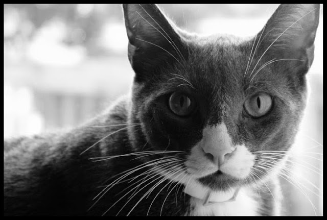 pretty cat eyes