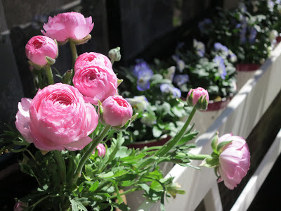 ByHaafner, pink flowers, peonies, terrace