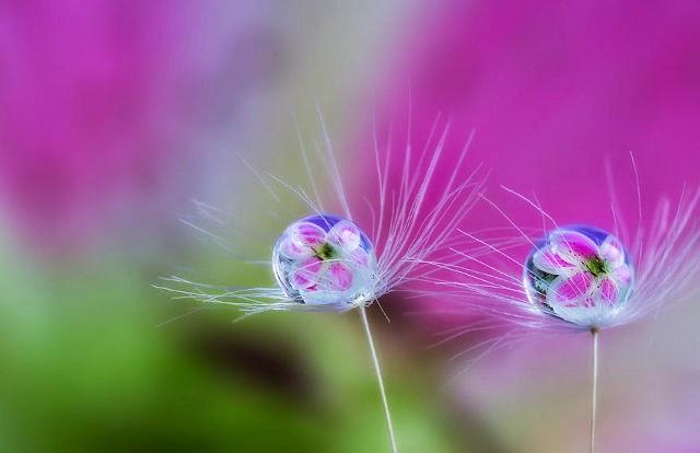 foto makro bunga