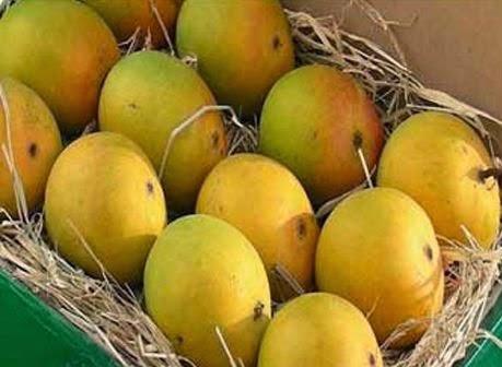 agencia de viajes india el mango fruta nacional de la india rh westernindianature blogspot com fruta nacional de chile fruta nacional argentina