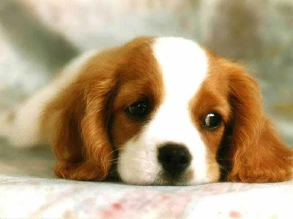 http://3.bp.blogspot.com/-uBE444eY_cw/ToQ6g4ruQvI/AAAAAAAAAhA/WOogT-U6Lfk/s1600/Puppy-3-dogs-1993802-1024-768.jpg