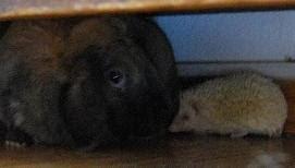 Ninka z króliczkiem