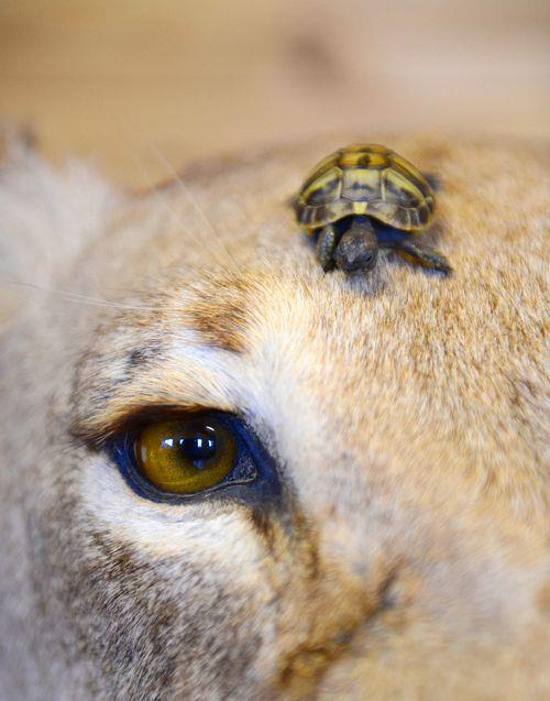 Awesome Animals blog: What a tiny Turtle!! :O