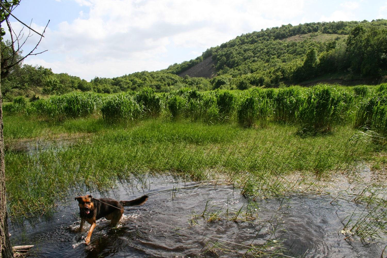 Rambo loving the pond