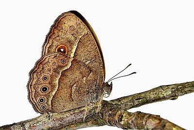 Speedy Evolution? — Butterflies' Color Changes in Only Six Generations