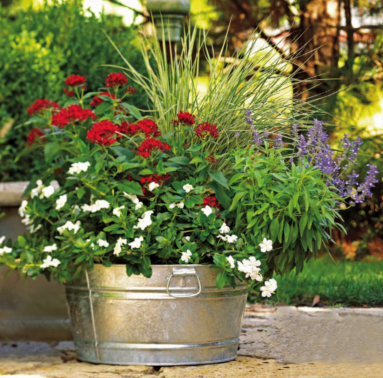 plantas jardins vasos:Casa da Nane: Jardim 02 – Vasos de Alumínios