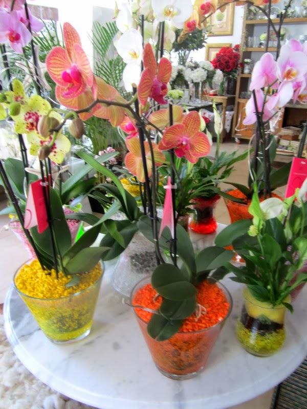 Plantas de floristeria la plaza plantas de flores la plaza - Plantas con flor de interior ...