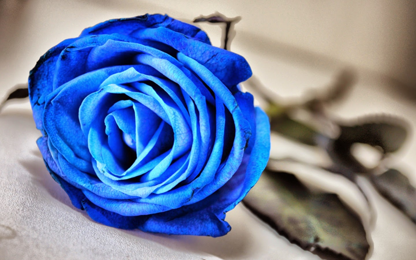 blue roses hd wallpapers free download | free hd wallpapers download