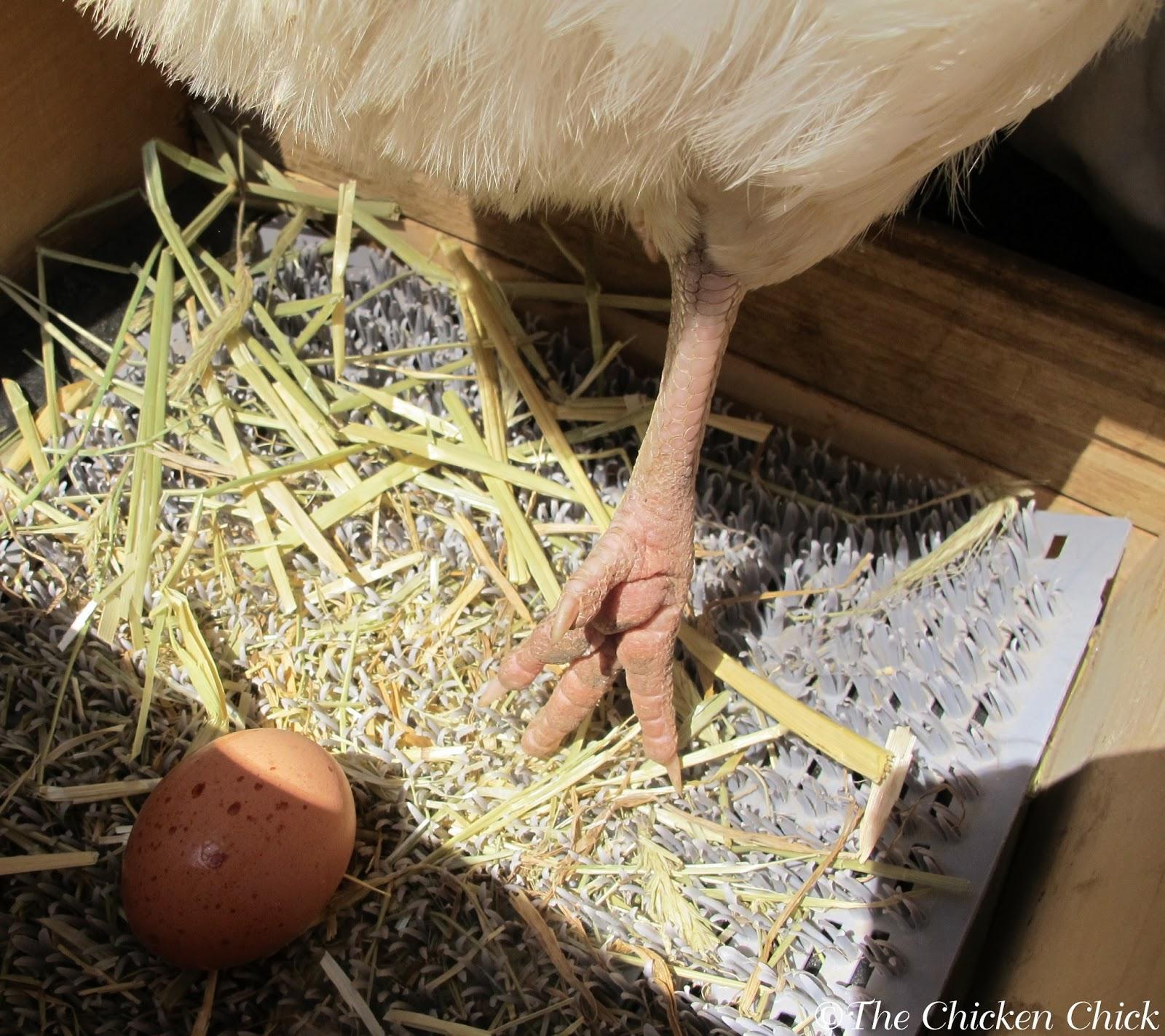 Best Chicken Nest Box Bedding