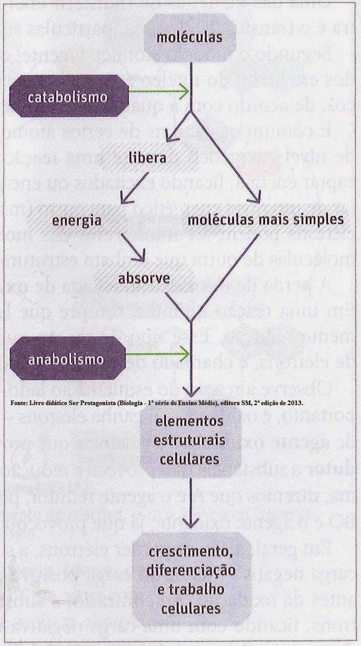 Metabolismo Celular Esquema | www.pixshark.com - Images