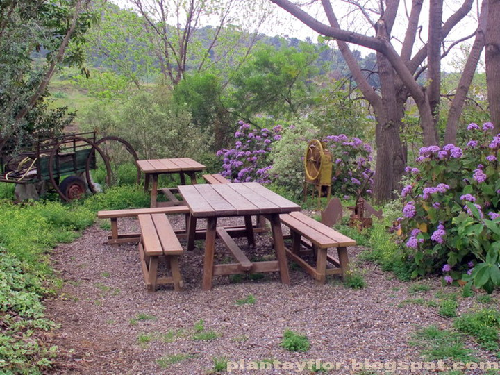 Plantas y flores jard n bot nico hist rico de m laga fotos for Jardin botanico de malaga